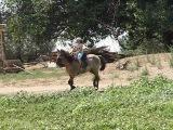 Галоп на лошади